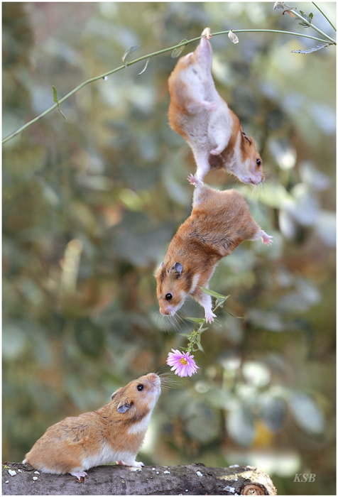 Friendship, Cooperation and Love